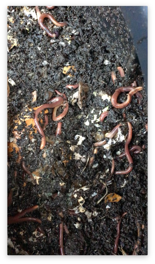Can of worms jpg